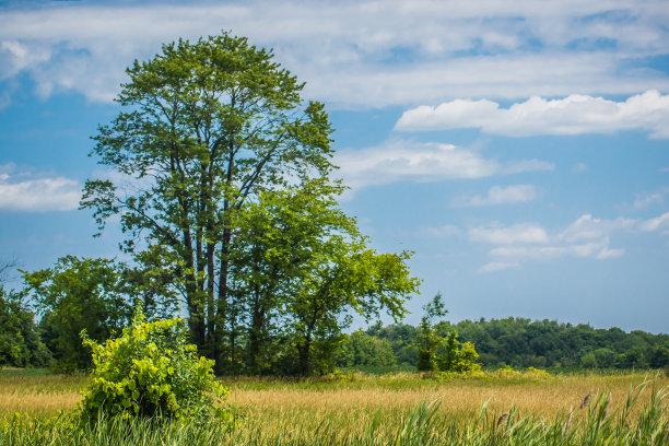 田地蓝色背景农业