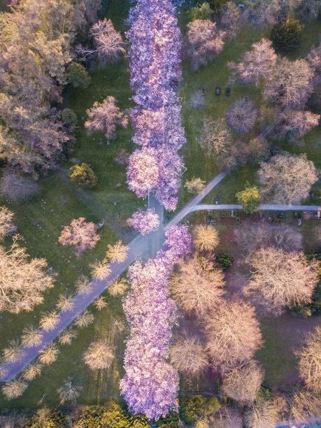 丹麦花朵墓地