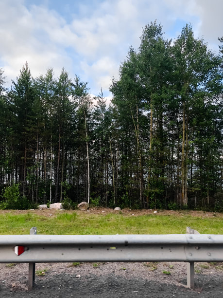 森林篱笆松树