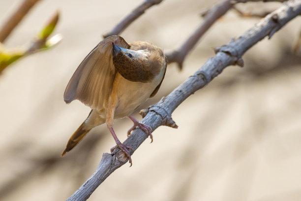 鸟类喙图片