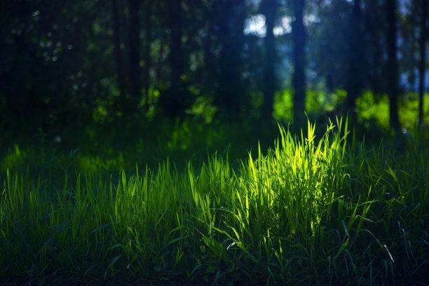 草树林草坪