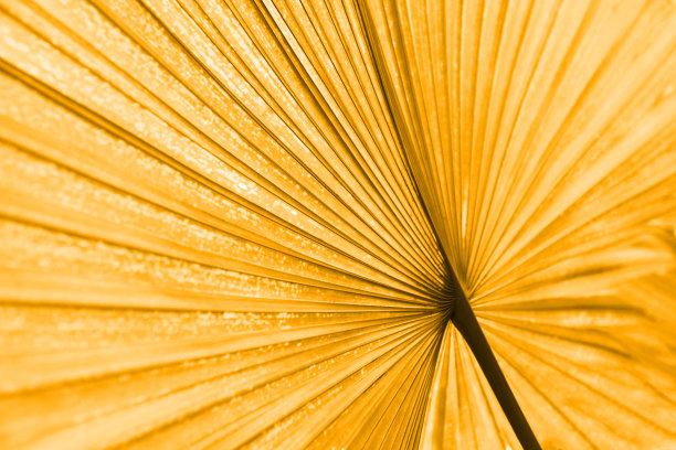 叶子棕榈树纹理效果