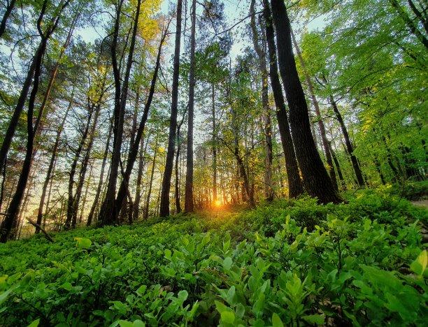 春天绿色树林