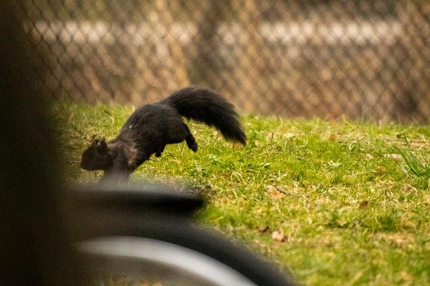 松鼠可爱的图片