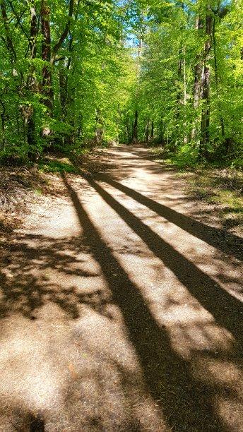 阴影枝繁叶茂梅克伦堡前波莫瑞州