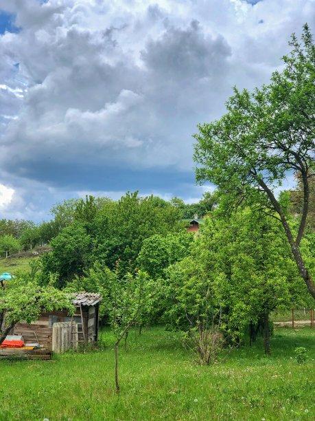 自然树林房屋