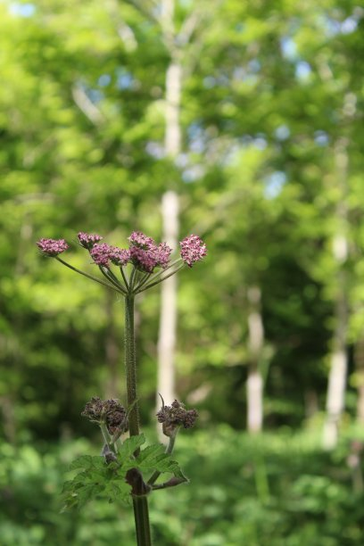 树林粉色花