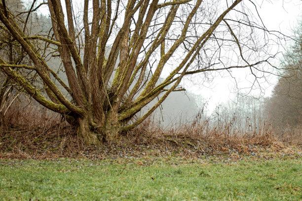 树干林间空地特写