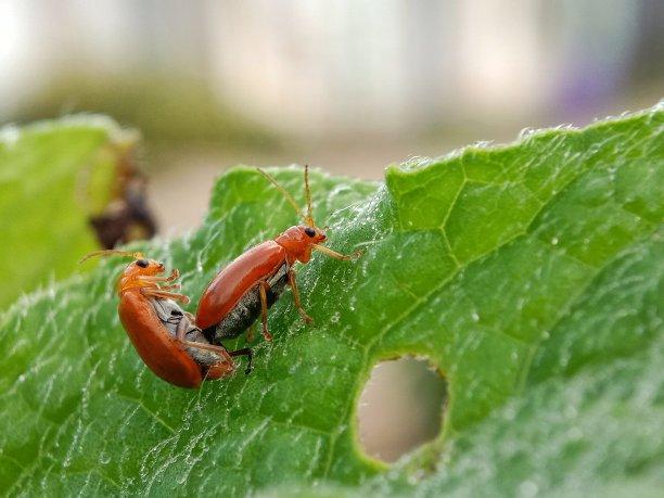 昆虫叶子图片