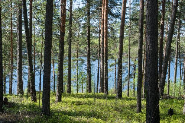 森林常绿树日光