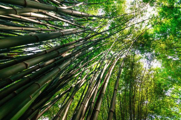 泰国自然竹林