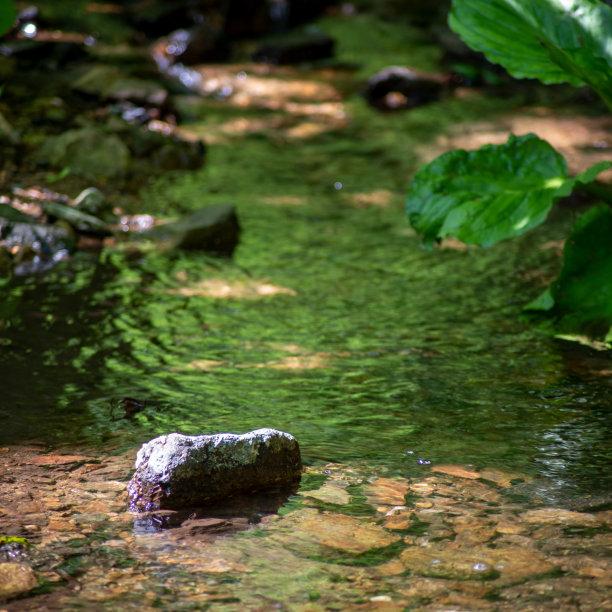 小溪森林水