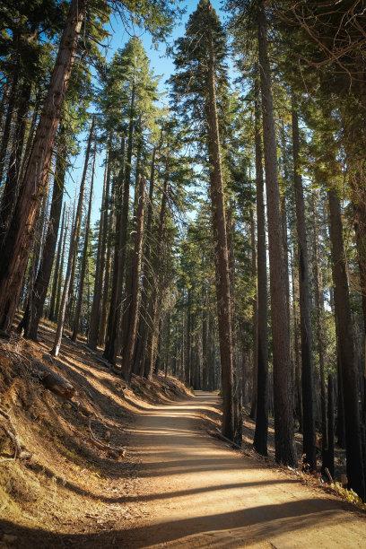森林旅途小路