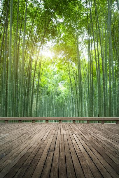 竹竹林绿色