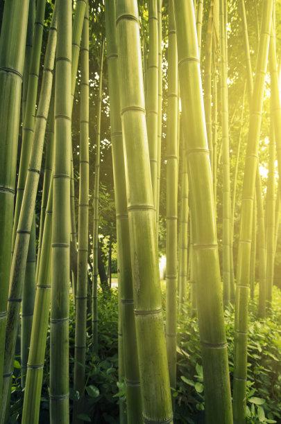 竹林热带气候公园