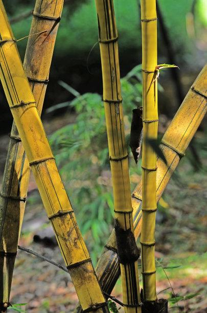 自然竹背景