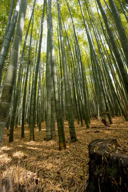 竹绿色清新