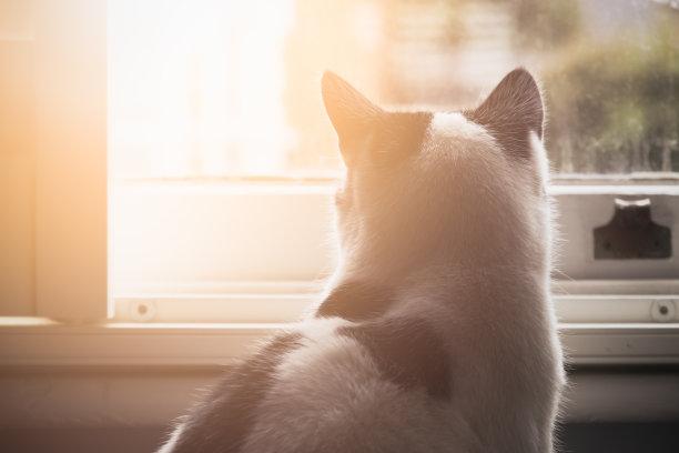 黑白猫光透过窗户往外看