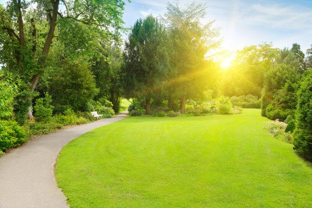 日光,早晨,菜园