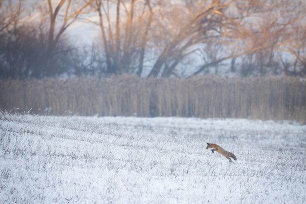 雪草地日出