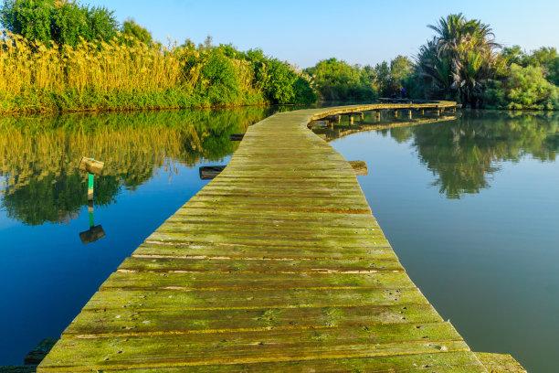 自然保护区,池塘,空中走廊
