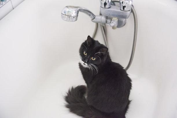 浴盆黑白猫可爱的