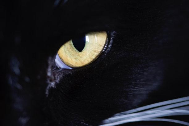 眼睛猫大特写