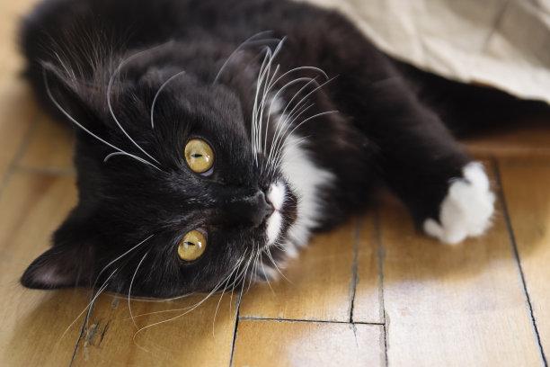 猫纸袋可爱的
