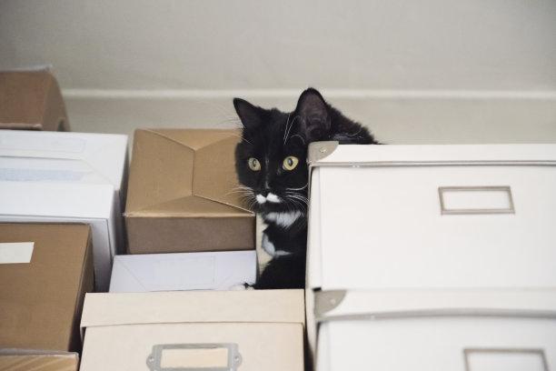 猫盒子在上面