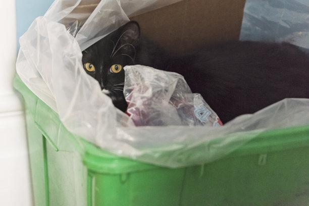 猫隐藏异乎寻常