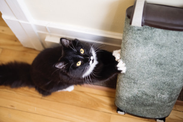 黑白猫猫抓板嬉戏的
