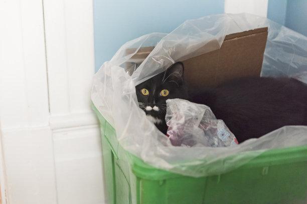 猫隐藏回收桶