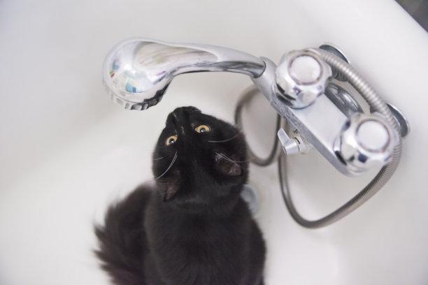 水滴浴盆黑白猫
