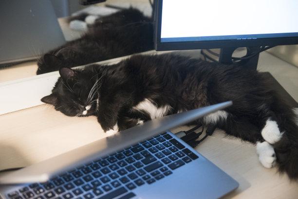 猫住宅内部睡觉