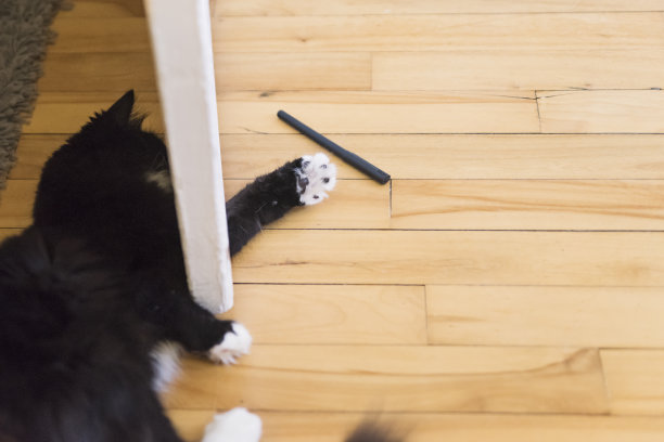 猫进行中水笔