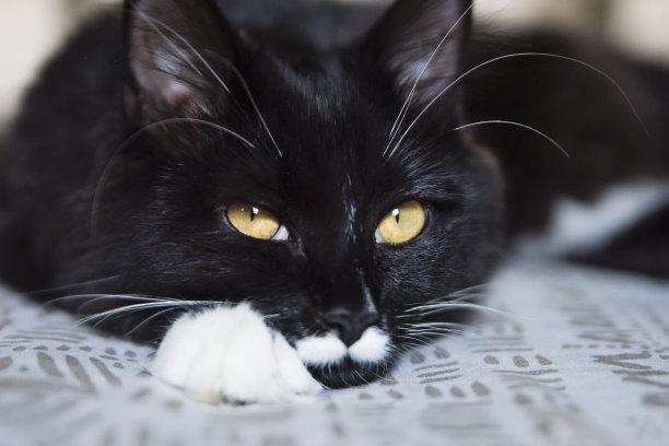 猫休息特写