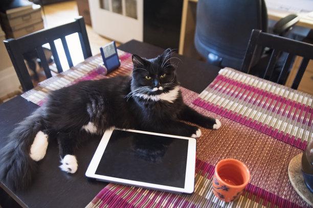 桌子猫茶杯