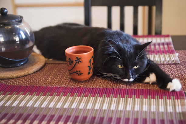 猫茶杯桌子