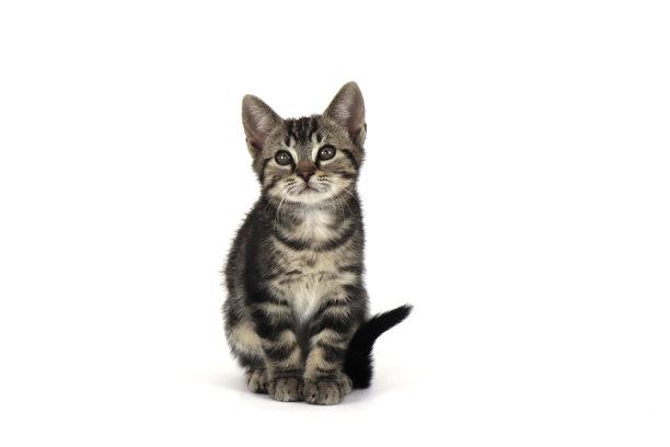 坐小猫可爱的