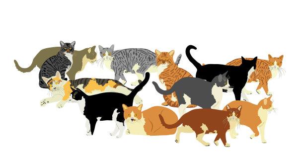 分离着色猫可爱的
