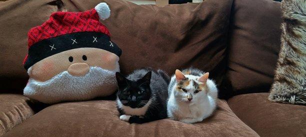 枕头圣诞老人小猫