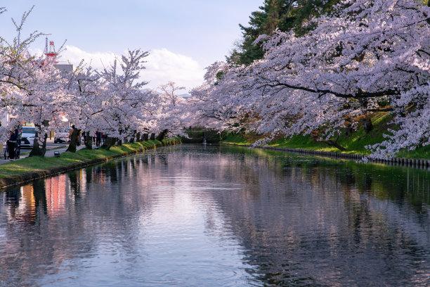 樱花,公园,水面